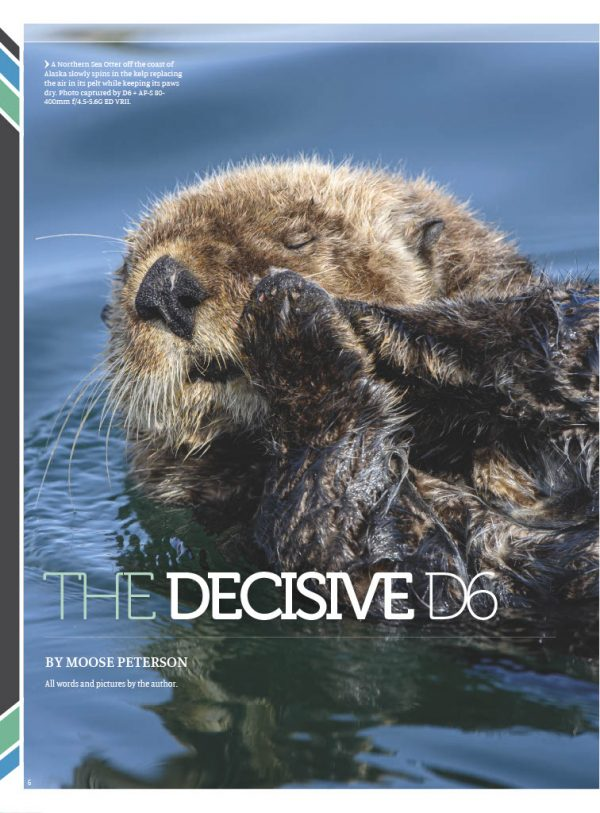 D6 article
